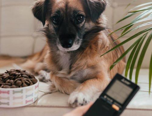 Promocja: zakup klimatyzację i ufunduj karmę dla zwierzaków!